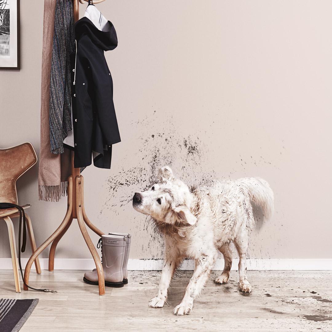 En gang malt med beige veggfarge og en skitten hund som rister seg.